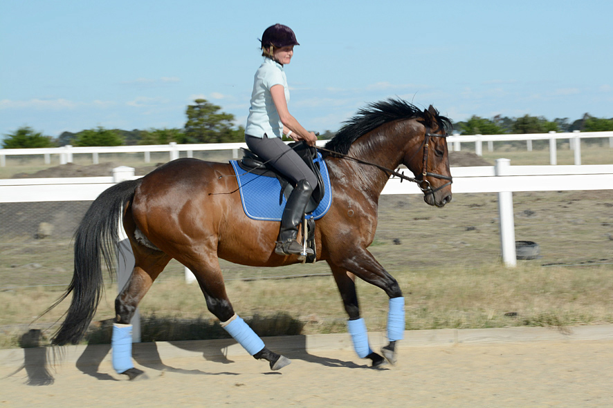 Tosca the thoroughbred before we knew about the marquis supergrip hoofboots in canter on the sand arena