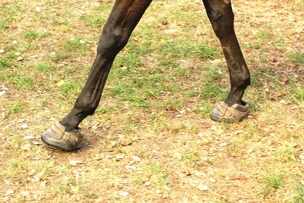 Marquis-on-hoof-07_2483_ed-1000