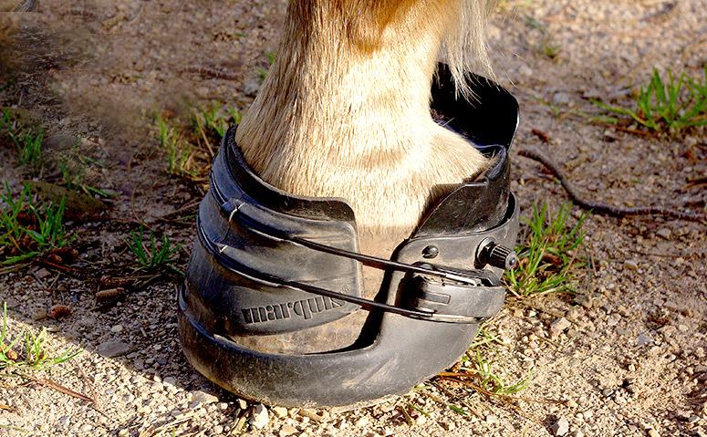 hoofboot-on-clubfoot